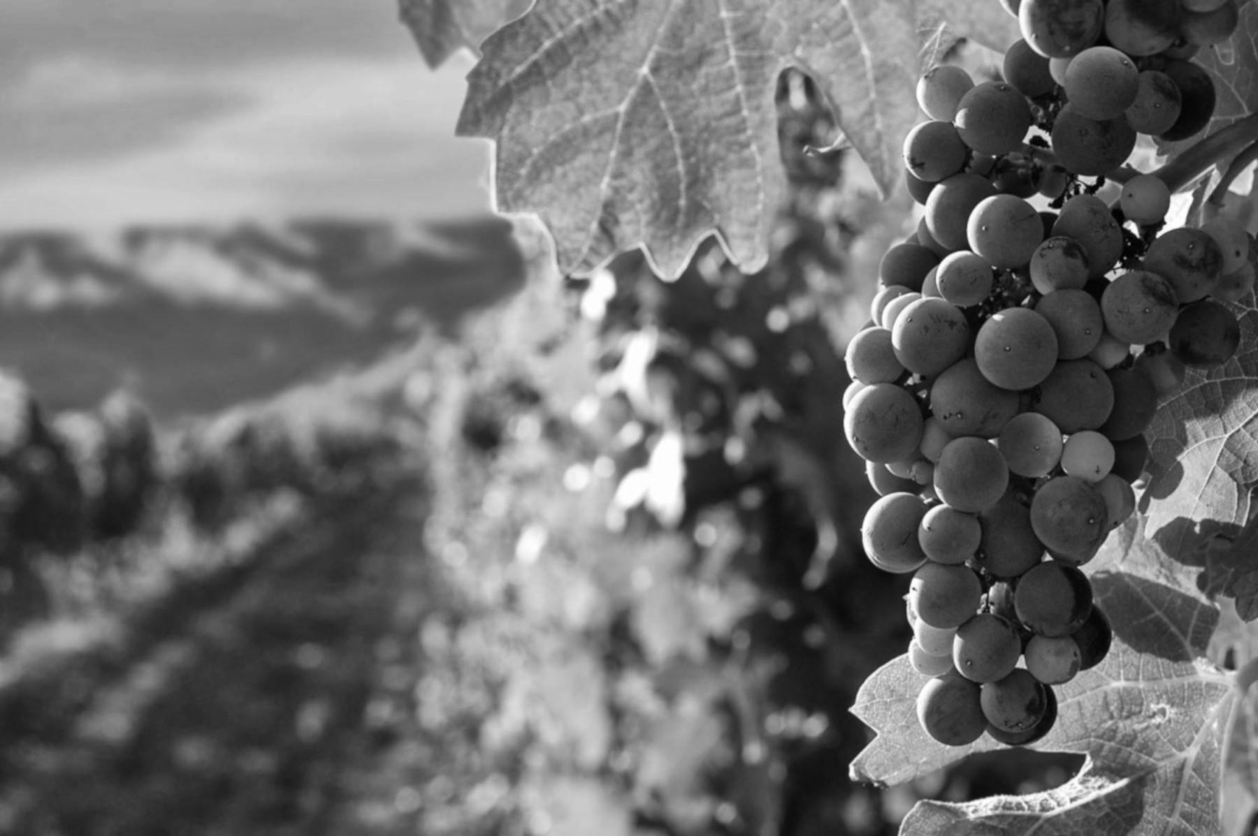 """Le Sode di Sant'Angelo cellar has chosen OREV® for its """"DAUTORE"""" wine"""